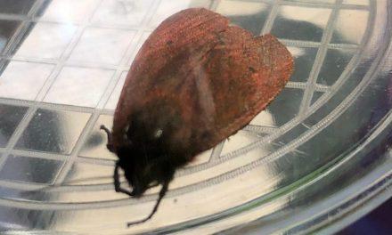 Orkaankrachten Junior ontdekken een bijzonder insect