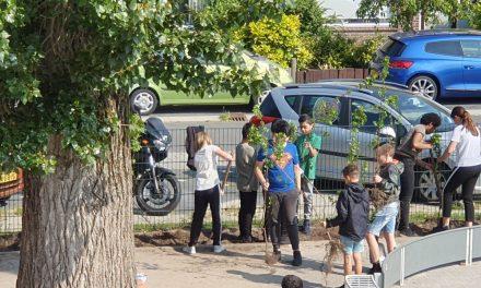 Okaanredactie Junior: Bomen planten Tamarinde