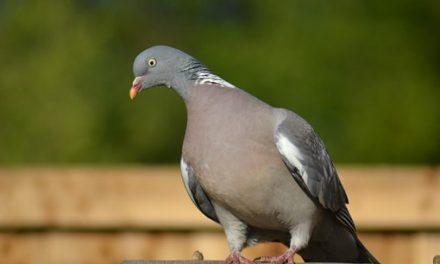 Ieder vogeltje zingt zoals hij gebekt is: Deel 4