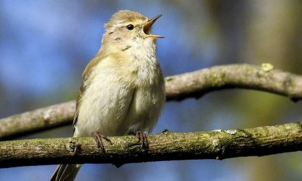 Ieder vogeltje zingt zoals hij gebekt is: Deel 2