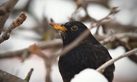 Ieder vogeltje zingt zoals hij gebekt is: Deel 1