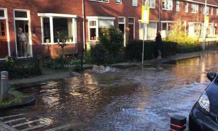 Vroeg waterballet in Zaandam (filmpje)