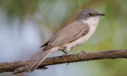 Ieder vogeltje zingt zoals hij gebekt is: deel 5