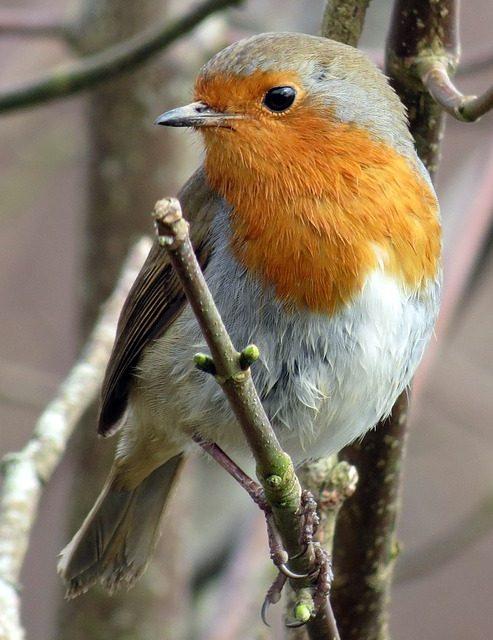 Ieder vogeltje zingt zoals hij gebekt is: Deel 6