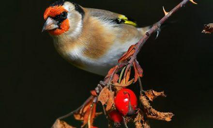 Ieder vogeltje zingt zoals hij gebekt is: Deel 8
