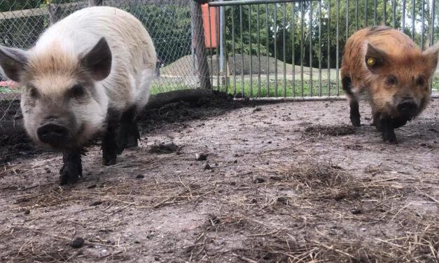Trudy, Bob en een Natuurspeelplaats (filmpje)
