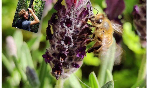 Huisbioloog Sam: Bijen in de stad