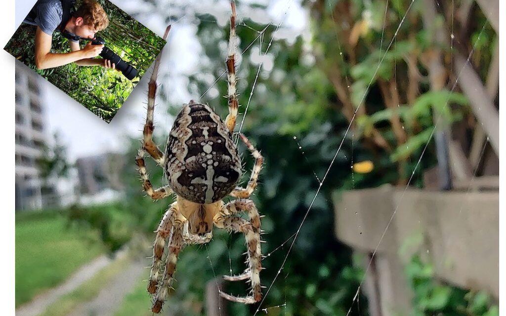 Huisbioloog Sam: Spinnenmaand september